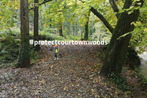 Courtown Woods: An Open letter to the County Manager and Councillors of Wexford County Council